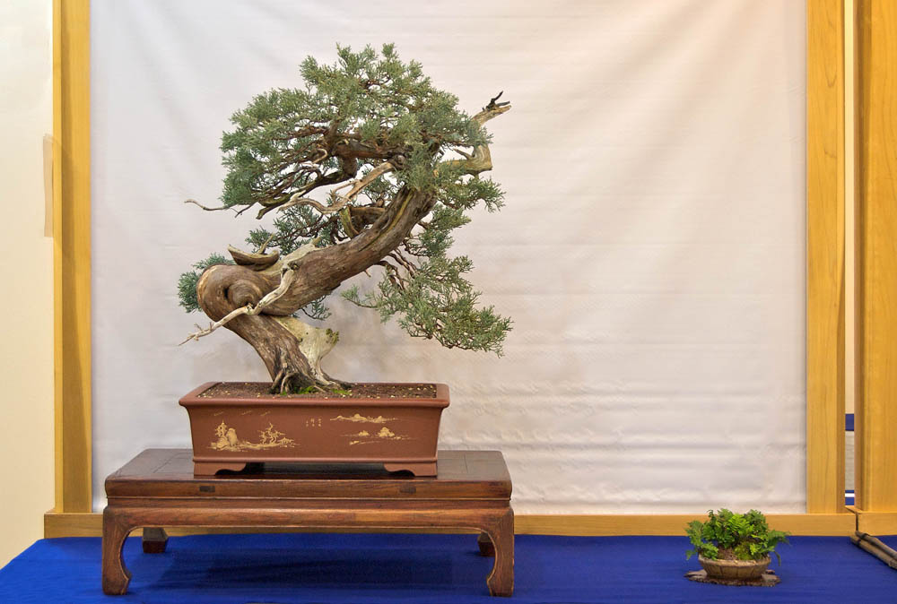 About Us Bonsai Society Of Dallas